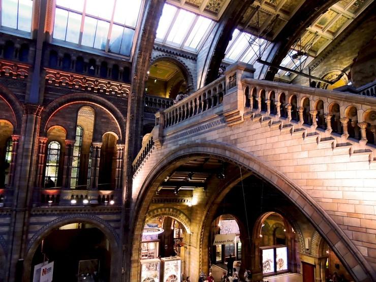 natural-history-museum-545184_1280