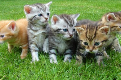 kittens-555822_1920