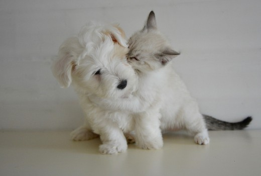 kiss-2728106_1280