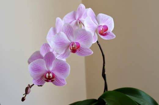 orchid-2427238_1280