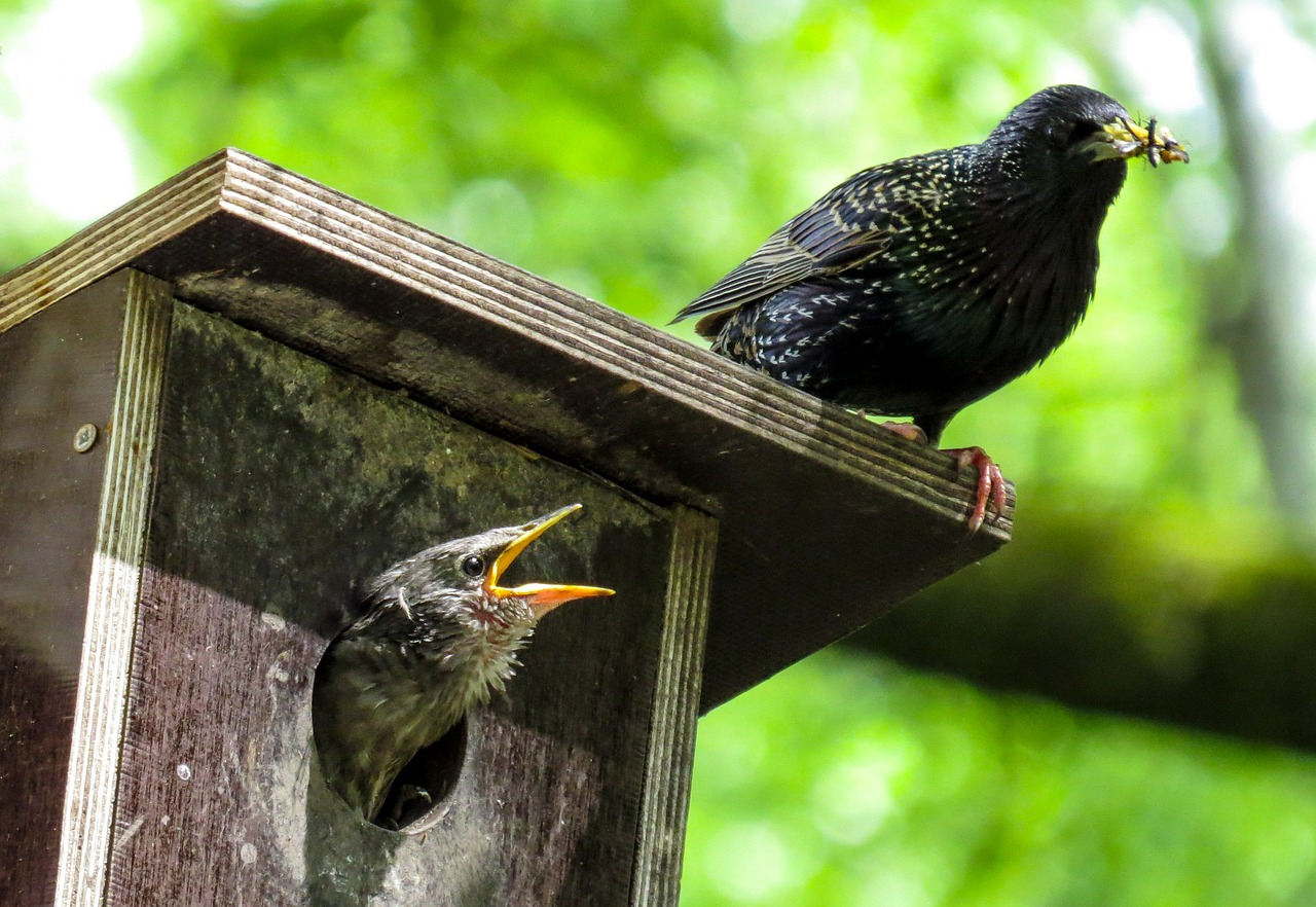 bird-759955_1280