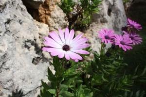 flower-892938_1280